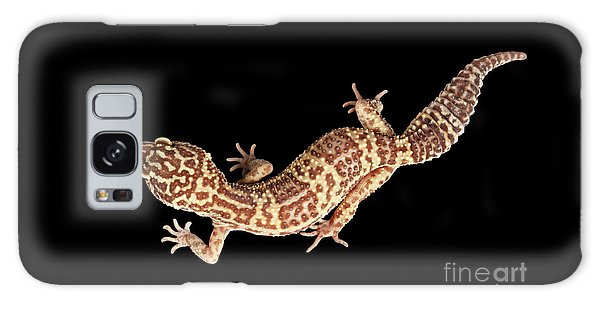 Closeup Leopard Gecko Eublepharis Macularius Isolated On Black Background Galaxy Case by Sergey Taran