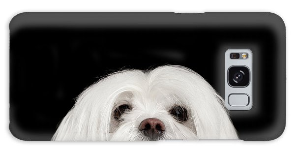 Closeup Nosey White Maltese Dog Looking In Camera Isolated On Black Background Galaxy Case