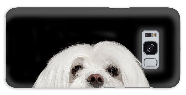 Dog Galaxy S8 Case - Closeup Nosey White Maltese Dog Looking In Camera Isolated On Black Background by Sergey Taran