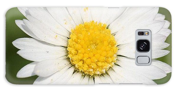 Closeup Of A Beautiful Yellow And White Daisy Flower Galaxy Case