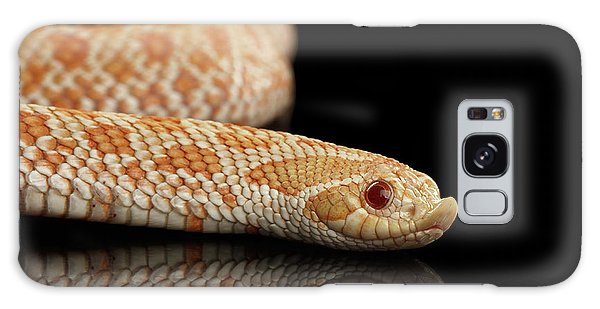 Closeup Pink Pastel Albino Western Hognose Snake, Heterodon Nasicus Isolated On Black Background Galaxy Case by Sergey Taran