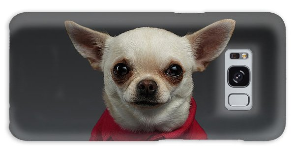 Dog Galaxy S8 Case - Closeup Portrait Chihuahua Dog In Stylish Clothes. Gray Background by Sergey Taran