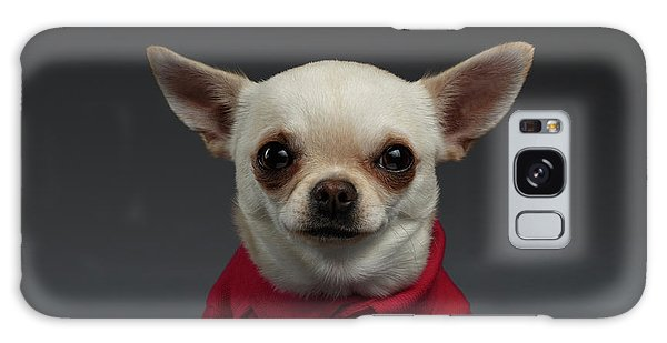 Closeup Portrait Chihuahua Dog In Stylish Clothes. Gray Background Galaxy Case