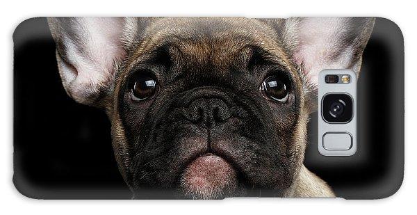 Closeup Portrait French Bulldog Puppy, Cute Looking In Camera Galaxy Case