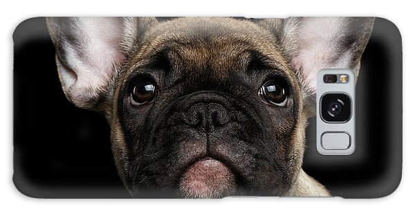 Closeup Portrait French Bulldog Puppy, Cute Looking In Camera Galaxy Case by Sergey Taran