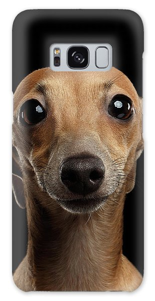 Closeup Portrait Italian Greyhound Dog Looking In Camera Isolated Black Galaxy Case