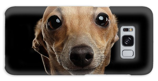 Closeup Portrait Italian Greyhound Dog Looking In Camera Isolated Black Galaxy Case