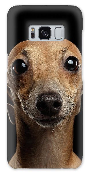 Dog Galaxy S8 Case - Closeup Portrait Italian Greyhound Dog Looking In Camera Isolated Black by Sergey Taran