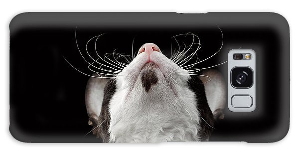 Closeup Portrait Of Cornish Rex Looking Up Isolated On Black  Galaxy Case