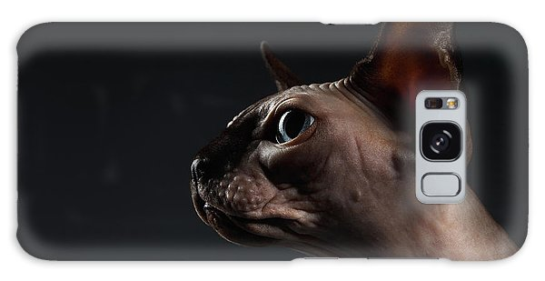 Closeup Portrait Of Sphynx Cat In Profile View On Black  Galaxy Case