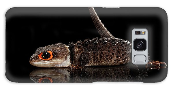 Closeup Red-eyed Crocodile Skink, Tribolonotus Gracilis, Isolated On Black Background Galaxy Case
