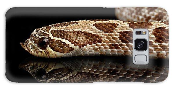 Closeup Western Hognose Snake, Isolated On Black Background Galaxy Case