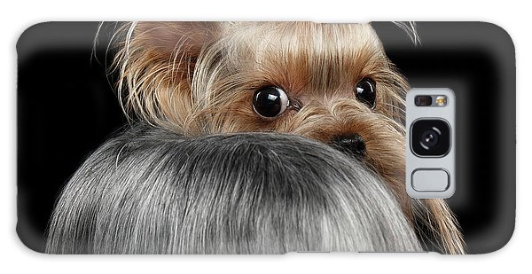 Closeup Yorkshire Terrier Dog, Long Groomed Hair Pity Looking Back Galaxy Case