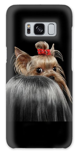 Closeup Yorkshire Terrier Dog, Long Groomed Hair Pity Looking Back Galaxy Case by Sergey Taran