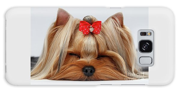 Closeup Yorkshire Terrier Dog With Closed Eyes Lying On White  Galaxy Case by Sergey Taran