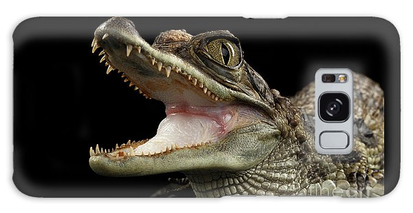 Closeup Young Cayman Crocodile, Reptile With Opened Mouth Isolated On Black Background Galaxy Case by Sergey Taran