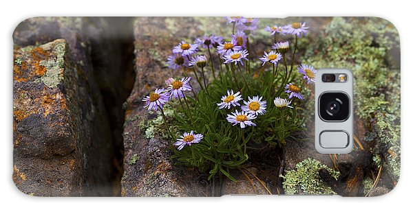 Clump Of Asters Galaxy Case