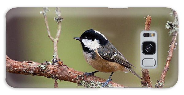 Coal Tit Periparus Ater Galaxy Case