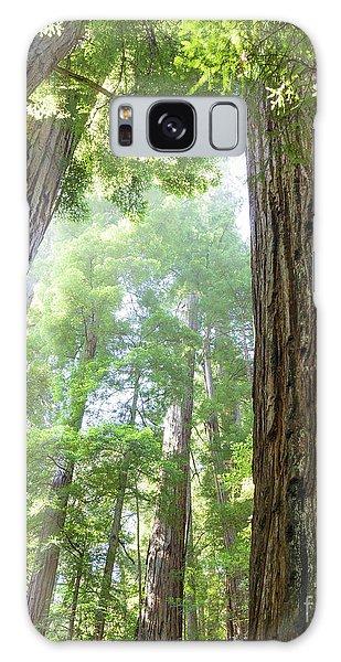 Coastal Redwoods  Galaxy Case