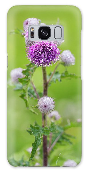 Cobweb Thistle Galaxy Case