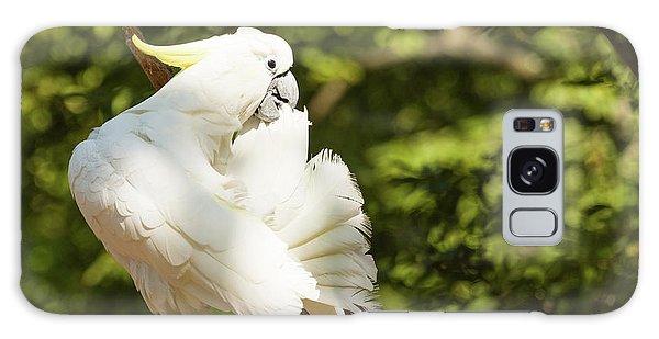 Cockatoo Preaning Galaxy Case