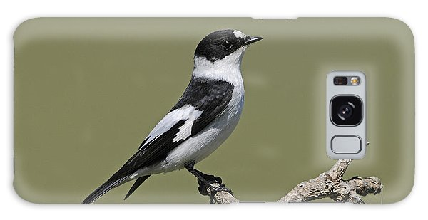 Collared Flycatcher Galaxy Case