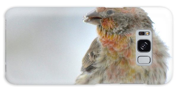Colorful Finch Eating Breakfast Galaxy Case