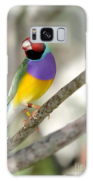 Colorful Gouldian Finch Galaxy Case