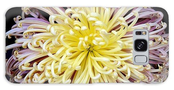 Colorful Spider Chrysanthemum   Galaxy Case