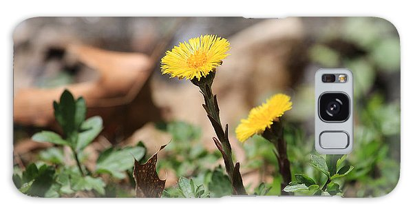 Coltsfoot Galaxy Case