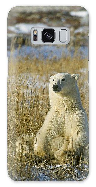 Comfortable Polar Bear Galaxy Case