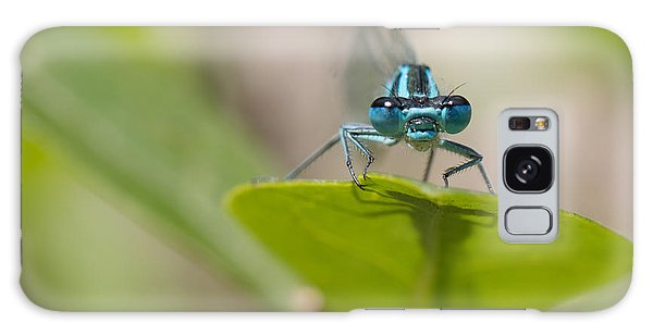 Common Blue Damselfly Galaxy Case