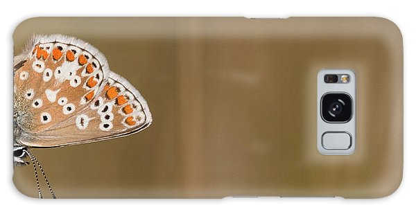 Common Blue Roosting Galaxy Case