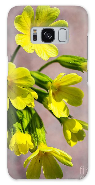 Common Cowslip In The Morning Sunlight Galaxy Case
