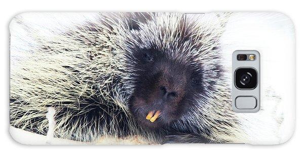 Common Porcupine Galaxy Case