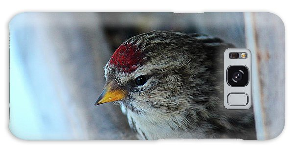 Galaxy Case featuring the photograph Common Redpoll by Ann E Robson