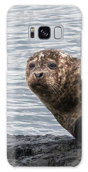 Common Seal Portrait Galaxy Case