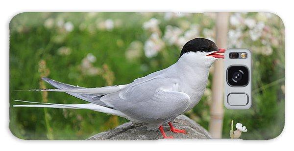 Common Tern Galaxy Case by David Grant