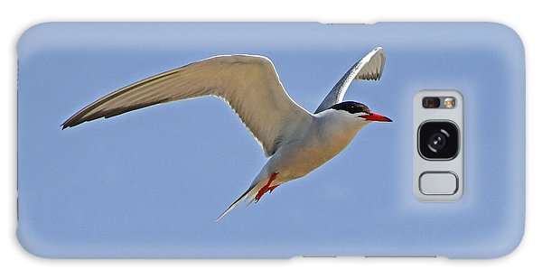 Galaxy Case featuring the photograph Common Tern by Ken Stampfer