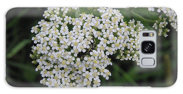 Common Yarrow Closeup Galaxy Case by Robyn Stacey