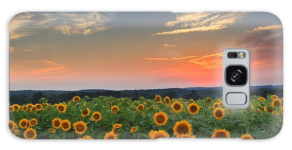 Sunrise Galaxy Case - Connecticut Sunflowers In The Evening by Bill Wakeley