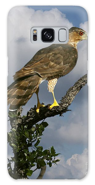 Cooper's Hawk On Watch Galaxy Case