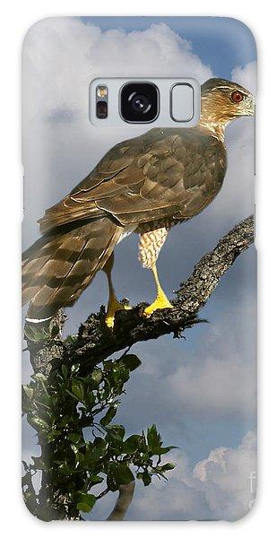 Cooper's Hawk On Watch Galaxy Case