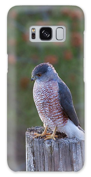 Coopers Hawk Perched Galaxy Case