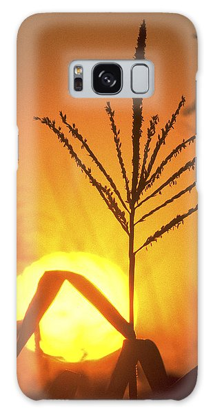Cornfield Sunset Galaxy Case