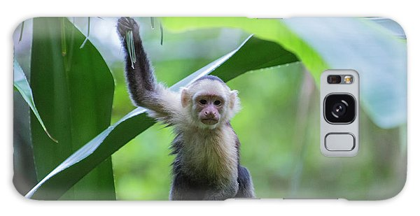 Costa Rica Monkeys 1 Galaxy Case