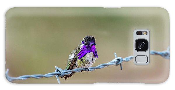 Costa's Hummingbird Galaxy Case