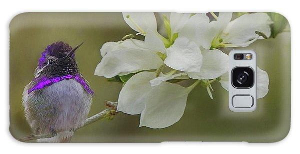 Costas Hummingbird On An Anacacho Orchid Branch Galaxy Case