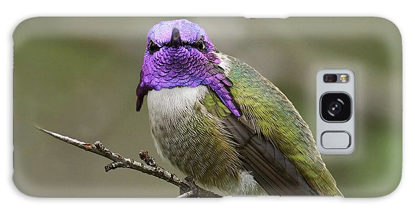 Costa's Hummingbird, Solano County California Galaxy Case