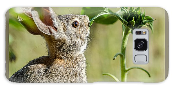 Cottontail Rabbit Eating A Sunflower Leaf Galaxy Case